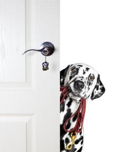 dog boarding marietta ga