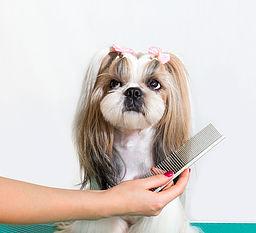 Dog Grooming Marietta GA