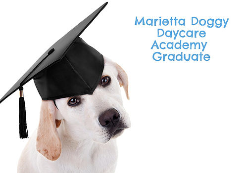 dog training marietta ga